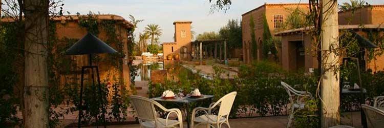 Palmier fou Marrakech