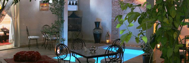 Oiseau du Paradis Marrakech